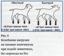 Биомеханика суставов собаки марихуана и суставы