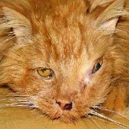 Гнойные выделения из носа кот