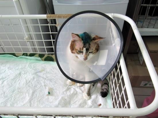 Опухоль мозга у собаки: симптомы, лечение, прогноз