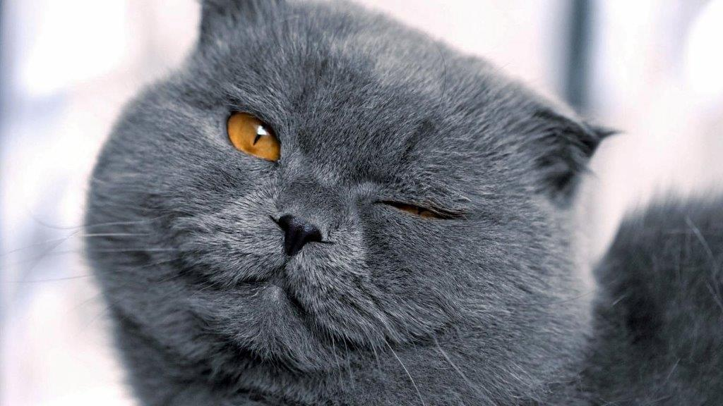 у кота вылез глаз