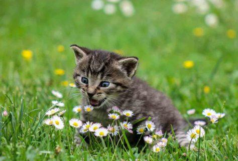 Котик в цветах