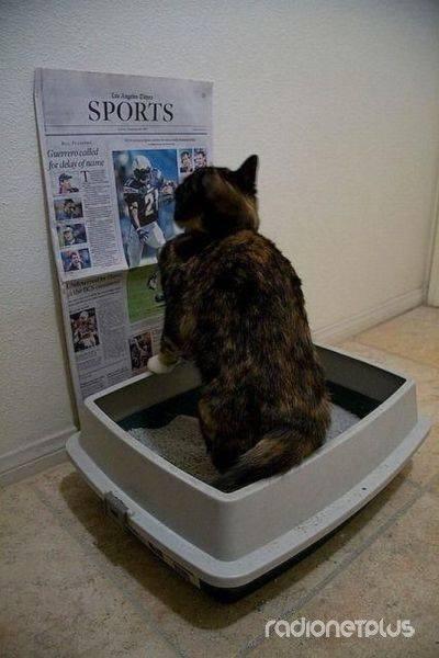 Кот в лотке