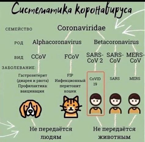 Систематика коронавируса