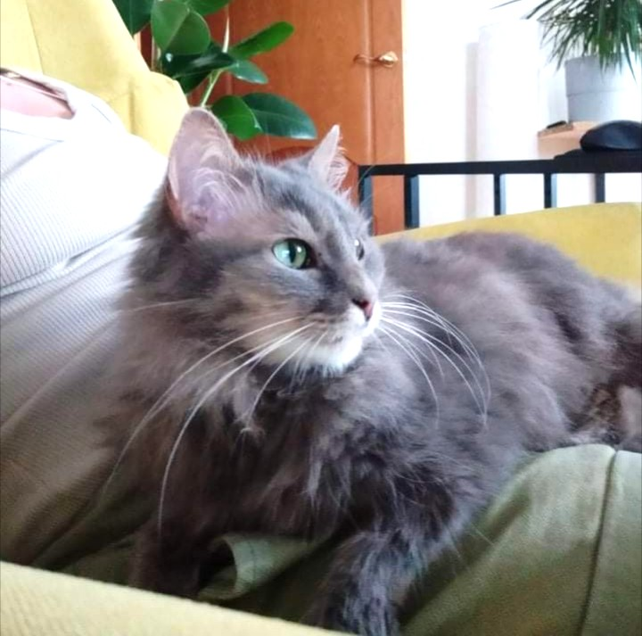 Домашняя Кошечка Любит Веселье